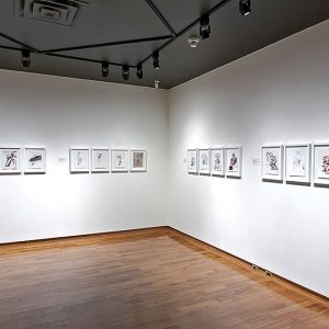 16 drawings on display