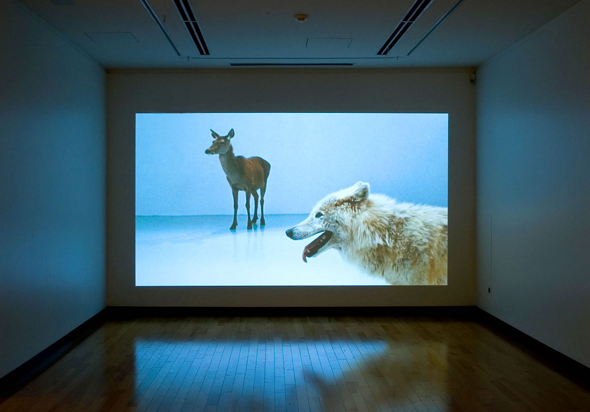 Video still of wolf and deer