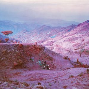 """Richard Mosse, Herd at Dusk, 2011. Digital C-print. Edition 1 of 2. 183 x 229 cm. Courtesy of the Artist and Jack Shainman Gallery, New York"""