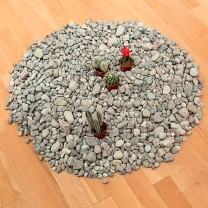 Pile of rocks with small cacti