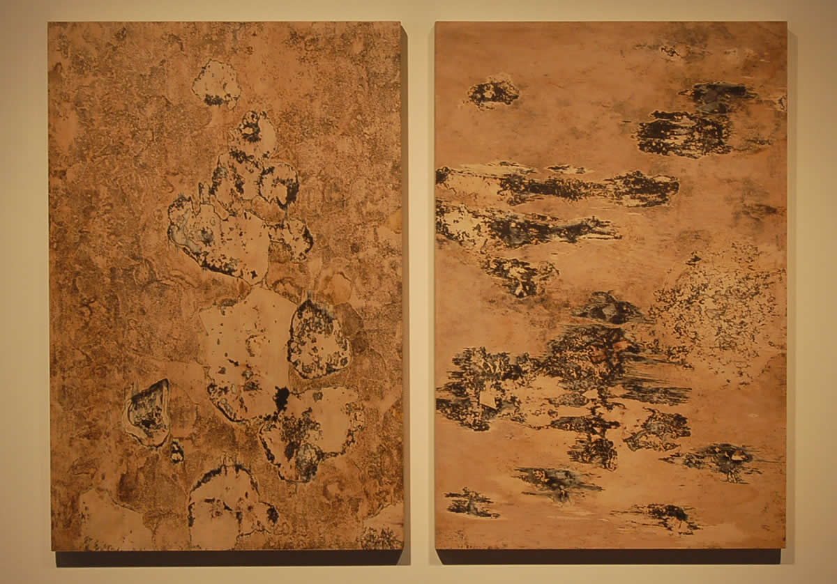 Two wooden boards with growing fungus