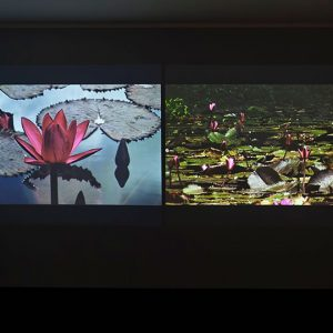 Side by side photos of waterlilies