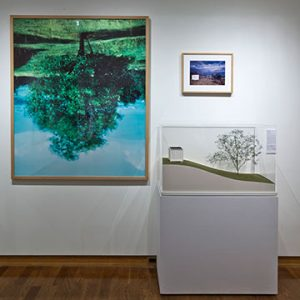 Framed picture of upside down tree next to smaller framed landscape picture above diorama