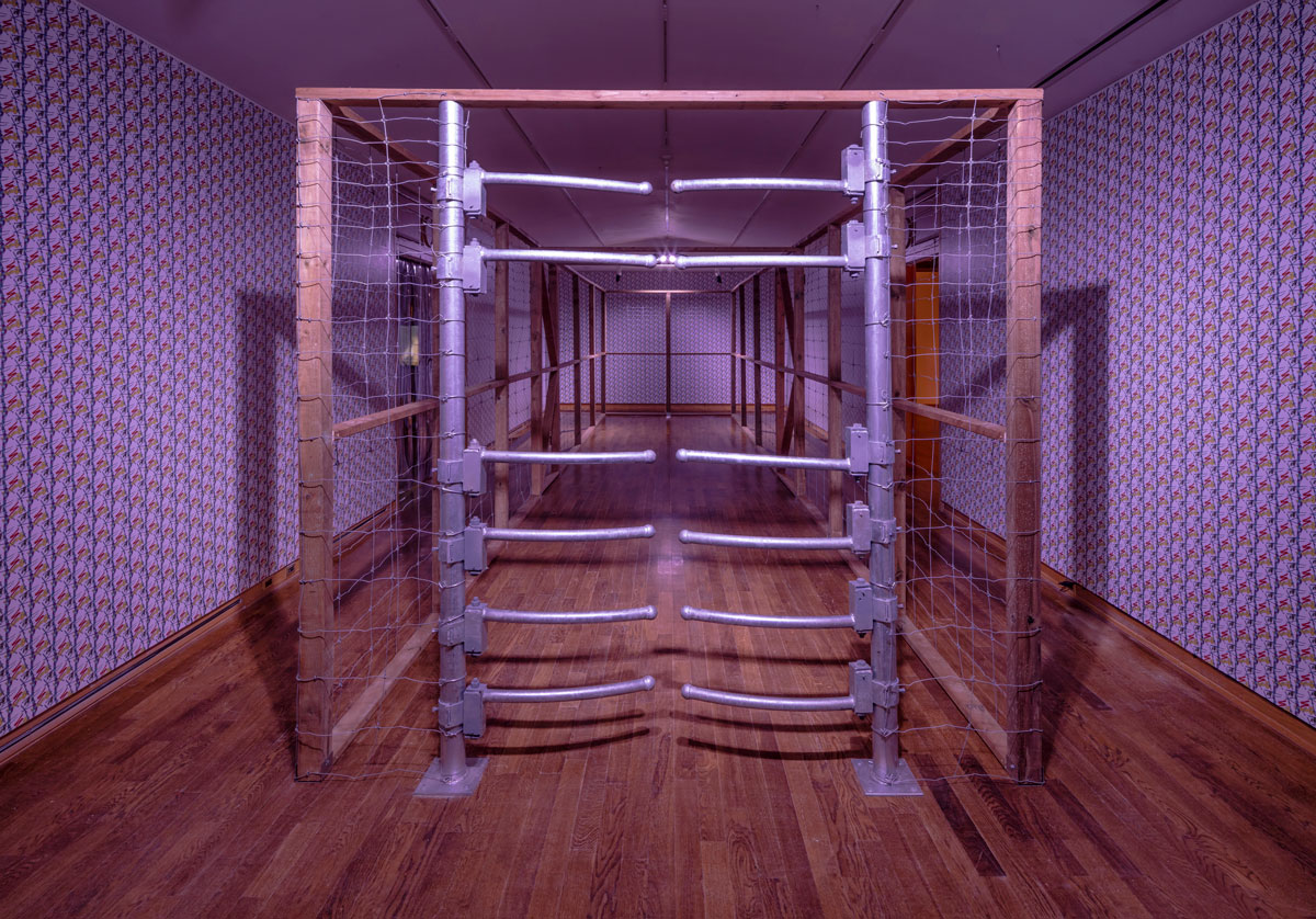 purple lighting and walls with a wood floor and a metal and wood pen-cage that scales the length of the room
