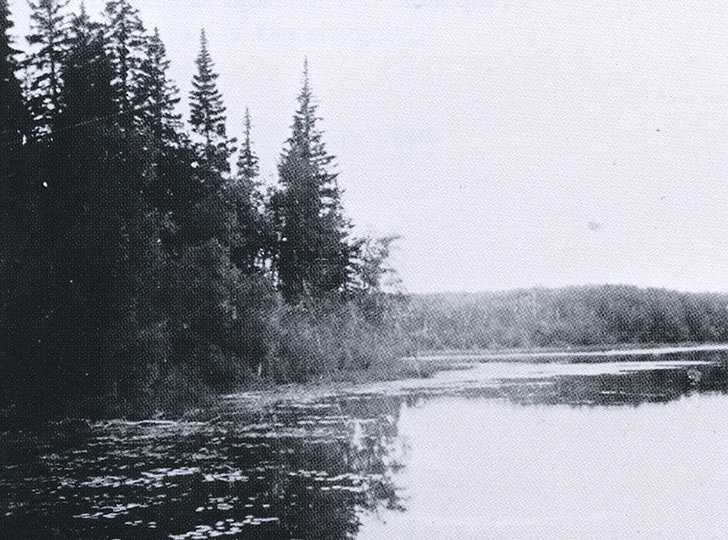 black and white film photograph of a lake and pine trees with lily pads on the water