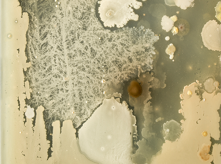Jon Sasaki, Microbes Swabbed From a Palette Used By Tom Thomson