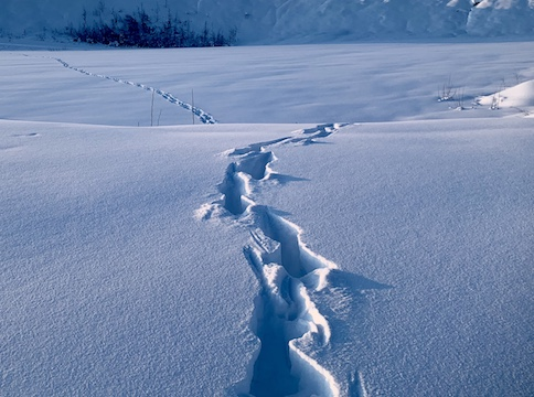 snowy landscape showing trail of footsteps in the snow