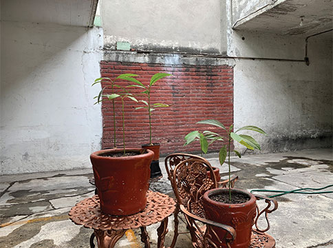 potted plants on outdoor table and chairs with red brick wall in distance